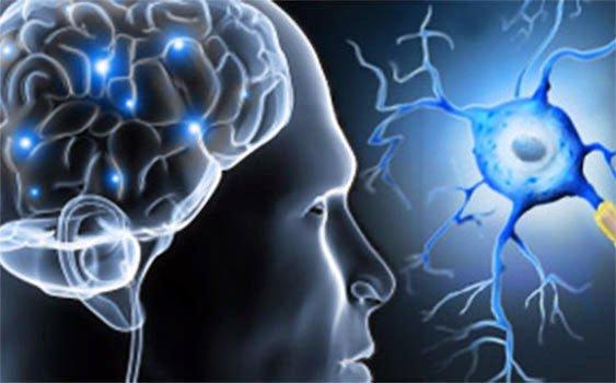 Photo of Bağırsak ve beyin arasındaki iletişim