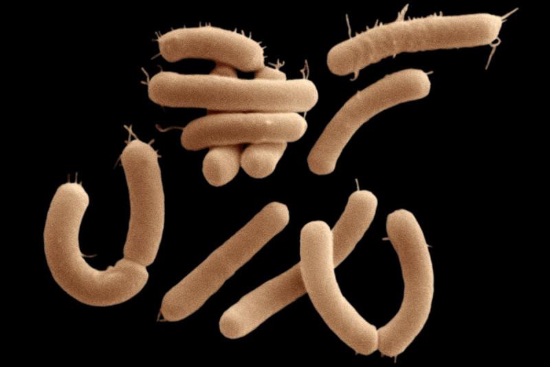 Photo of Bağırsak Bakterileri Beyindeki Kimyasalları Tüketiyor
