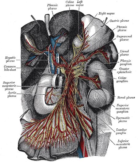 Photo of Crohn Hastalığına Genel Bir Bakış