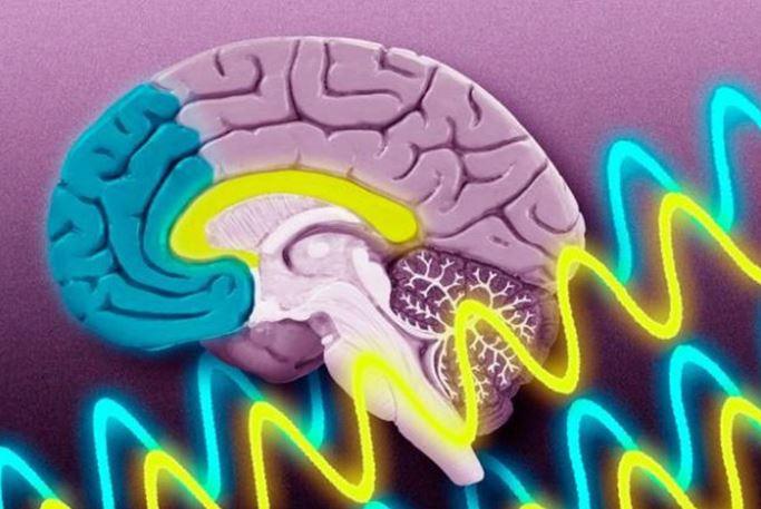 beyin bağırsak ilişkisi