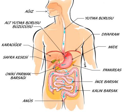 Photo of Crohn hastalığının bağırsak komplikasyonlarına ilerlemeyle ilişkili risk faktörleri
